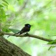 毎日暑い日が続きますね。 急な天候変動で被害に合われた各地の皆様の一日も早い復興を心よりお祈り申し上げます。 今日はお待ちかねの野鳥ギャラリーをお届け致します。 板津先生が撮影された、個性的で可愛らしい鳥たちの姿にどうぞ […]