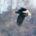 今週もまた全国的に寒い日が続くとのこと。 皆様どうぞお身体の具合や雪による事故などお気を付けくださいませ。  さて今日は板津先生の野鳥ギャラリーをお届け致します。 写真のあとには、御覧いただきました皆様へのお […]